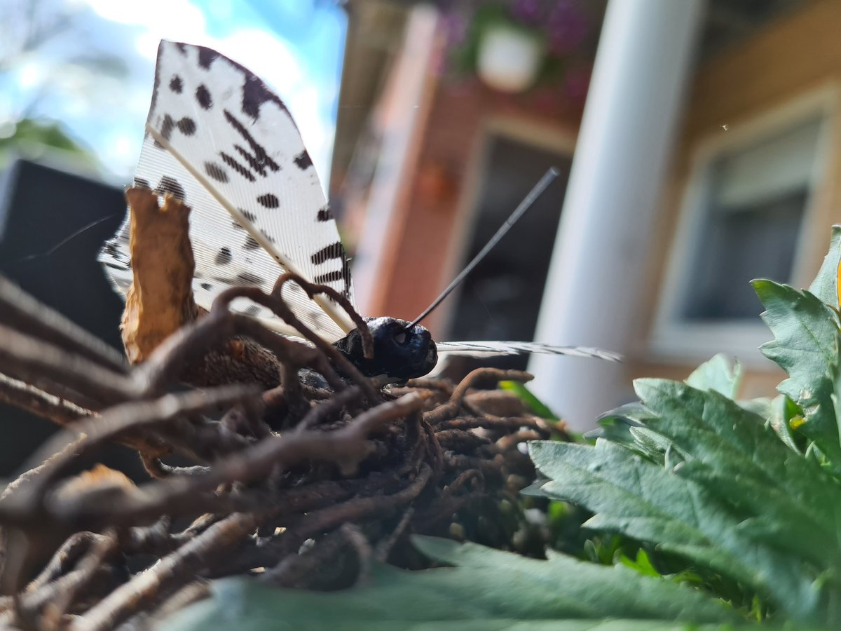 Mom's Garden Pt2 ~  #MobilePhotography #Photography #포토 #사진 #写真 #WithGalaxy #GalaxyS20 #Flower #Orange #Green #Sky #Sun #Pretty #Butterflypic.twitter.com/MaMrUeci0T