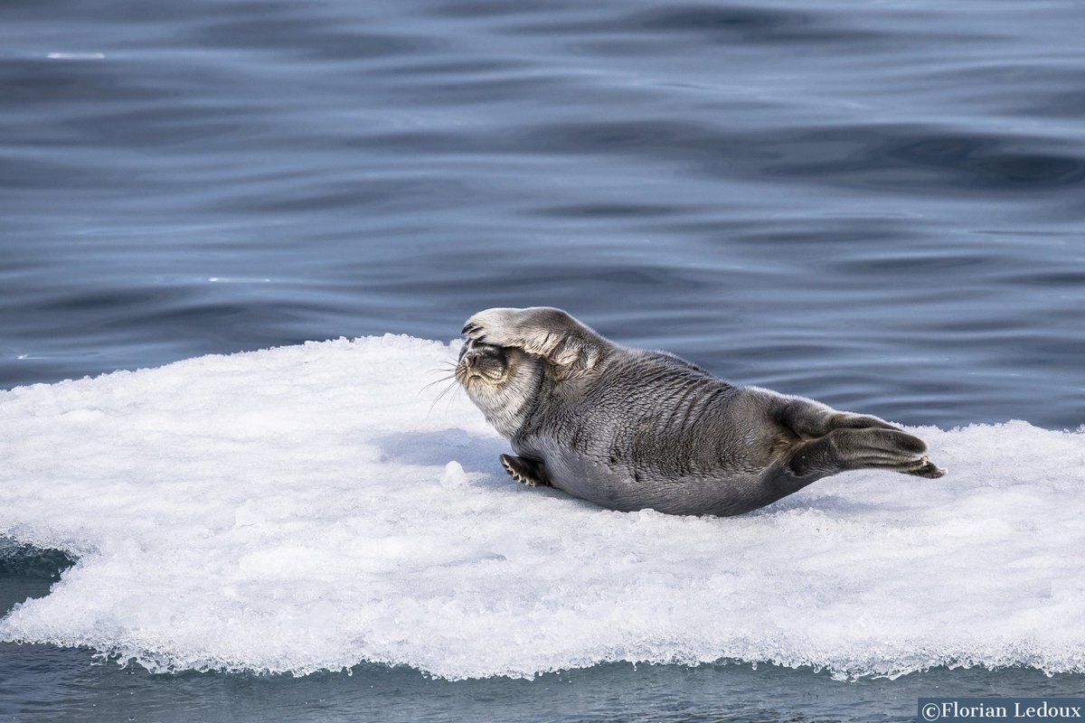 Like the seal in the @VSinkevicius tweet, also forest in Europe won't do with simply protection when faced with the major threats of climate change and calamities: biodiversity needs to be actively managed for #resilience https://t.co/6TGhnPeIDd