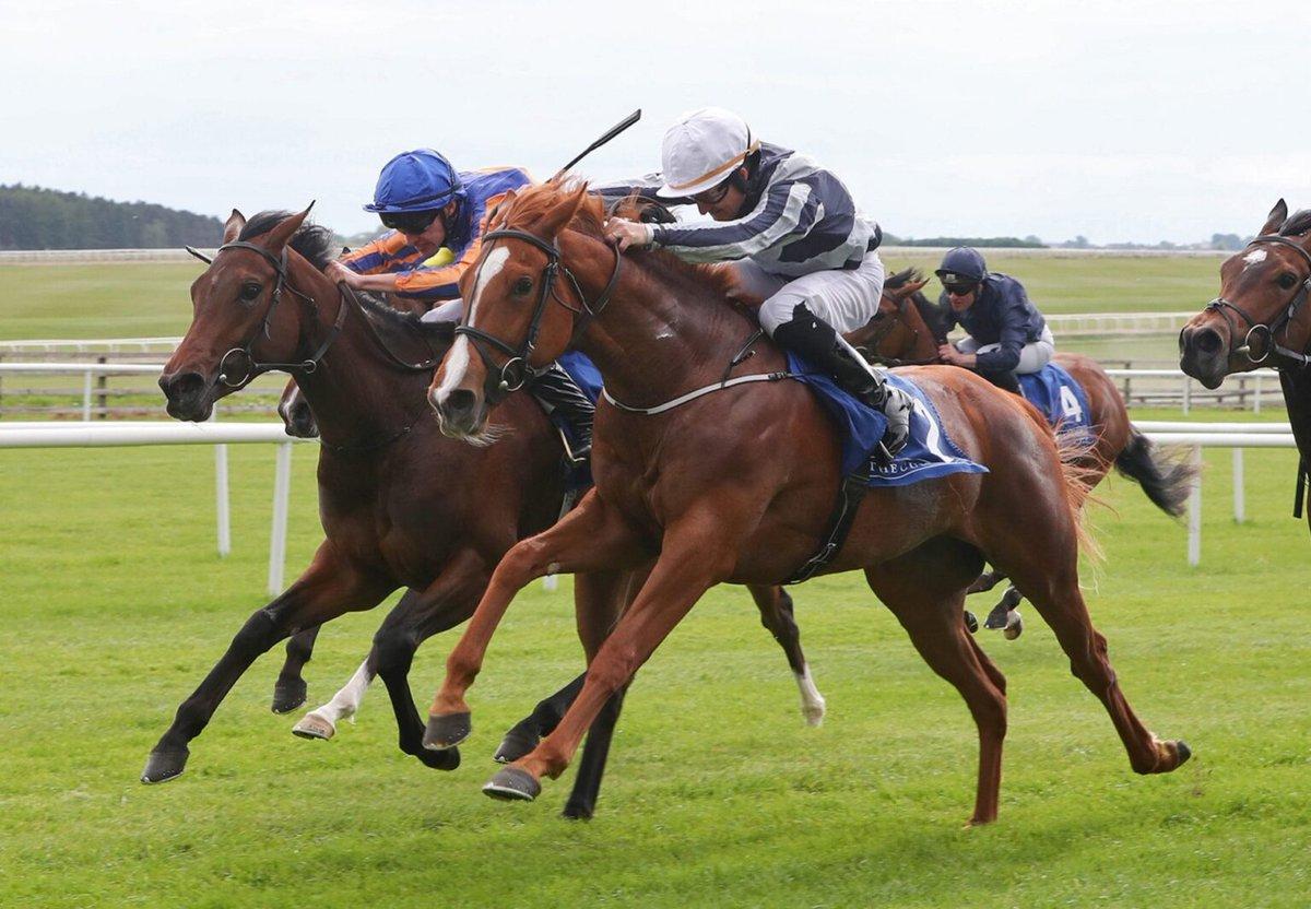 Irish 2000 guineas 2021 bettingadvice ladbrokes derby betting odds