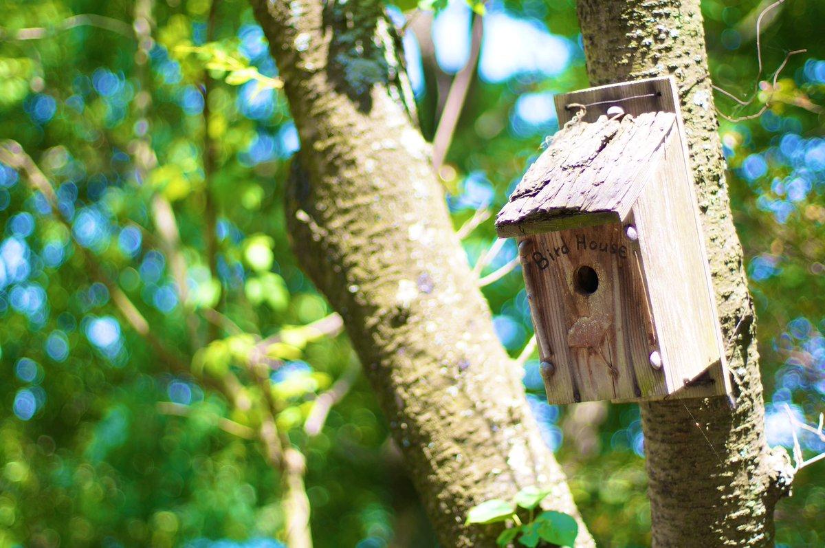 Bird house   Planar 1.4/50 T*  #オールドレンズ #キリトリセカイ #ファインダー越しの私の世界  #写真好きな人と繋がりたい #写真撮ってる人と繋がりたいpic.twitter.com/UIHCR2fBTB