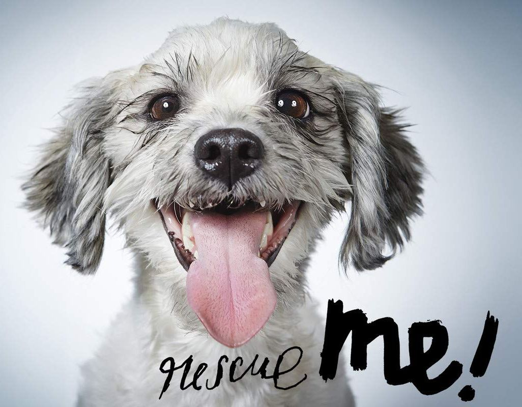 On May 20th, National Rescue Dog Day recognizes all the benefits of allowing a four-legged canine to adopt you into their immeasurably lovable life.  #RescueDog #AdpotADog #SaveAStray #SunServe #WeHelpPeople Find an adoption center: https://buff.ly/36hQ2Sypic.twitter.com/hPeBECtQcg