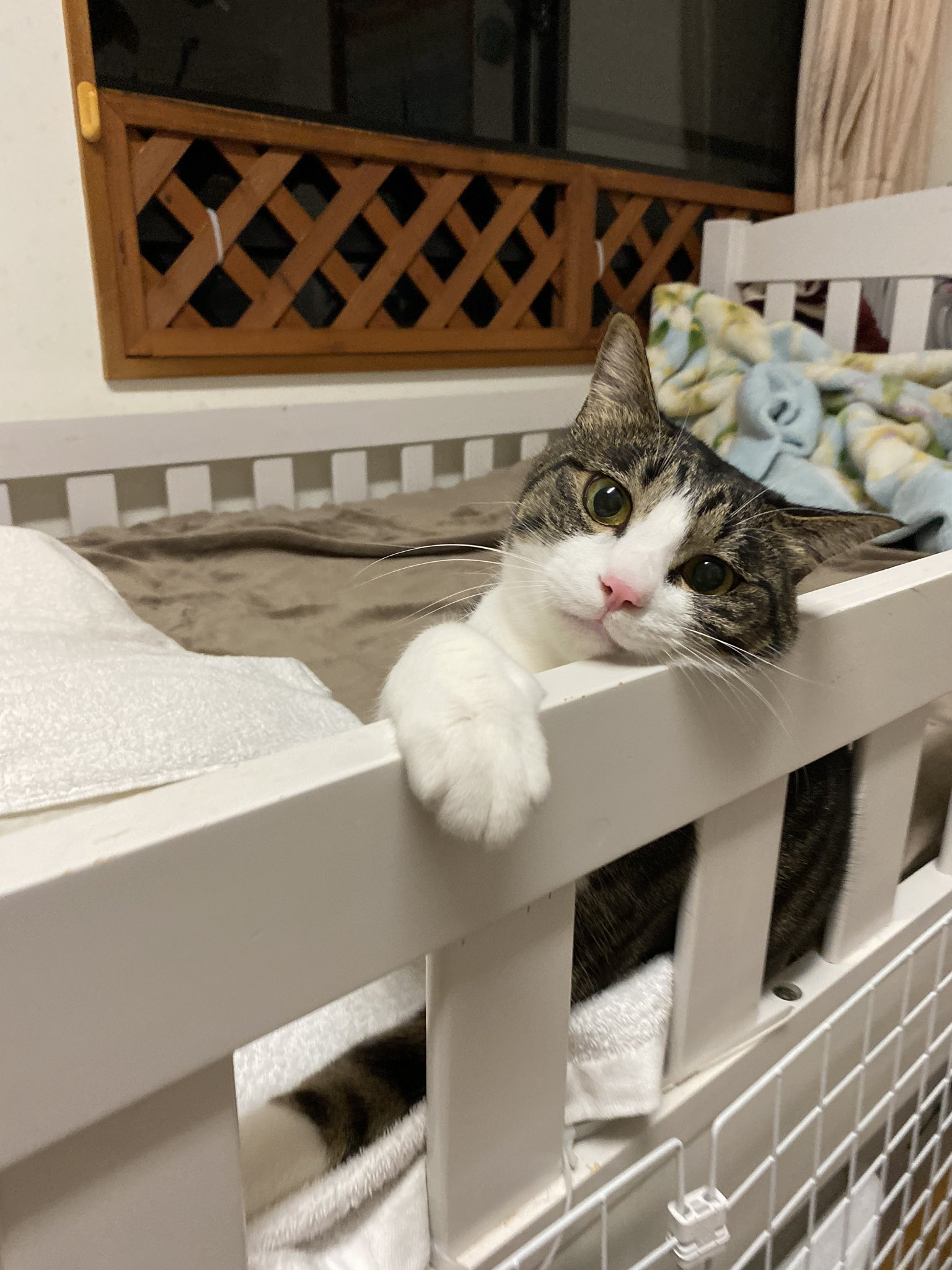 めちゃくちゃわかります!! 寝る前の美容液、シミのお薬ハイドロキノン、がっつり塗るの諦めました… おやすみで自ら4匹の猫吸いするのがいけないんですけどね(〃ω〃)