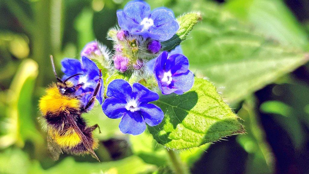 Summer is on its way #sunshine #bees #Flowers #naturelovers #WednesdayWisdom #Weatherpic.twitter.com/8TDVzQLS8U – at Inverleith Park