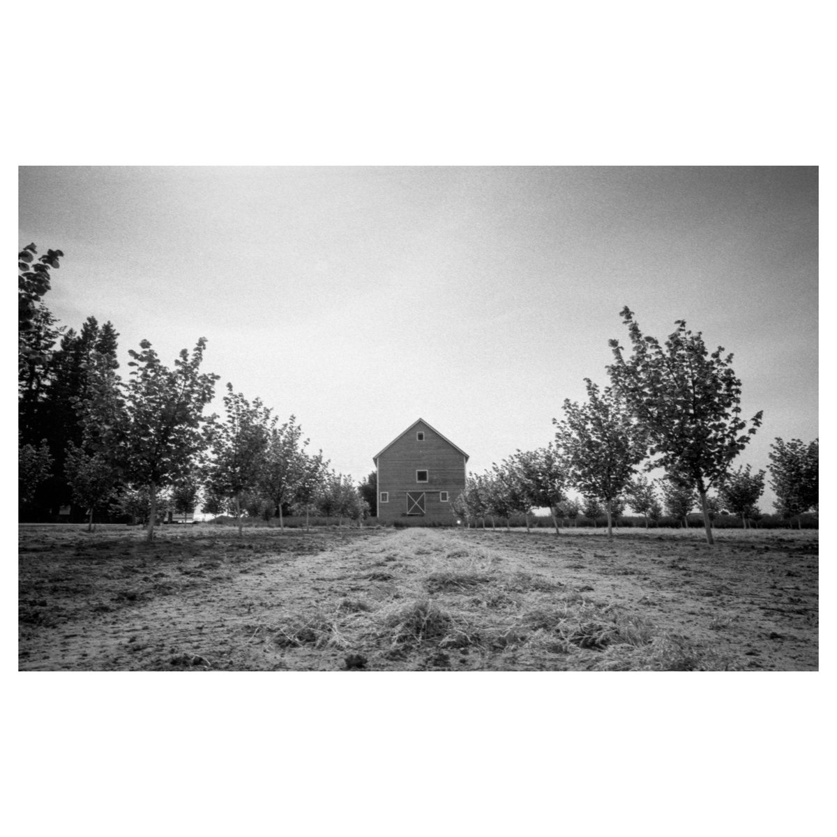 Oregon Wine Country during the Quar. #monochrome pic.twitter.com/K8eazuWbts