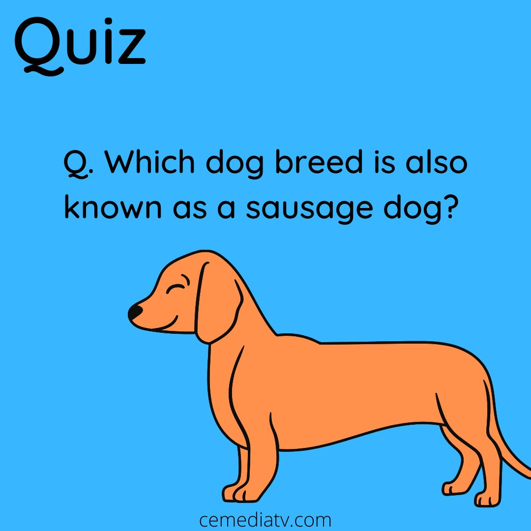 Does anyone know the answer?   #petmemes #petmeme #petmemed #pettymemes #petmemesofinstagram #petmemesdaily  #petamemes #petmemeow #petmemesarelife #pettymemestvpic.twitter.com/QzPjYHrNh8
