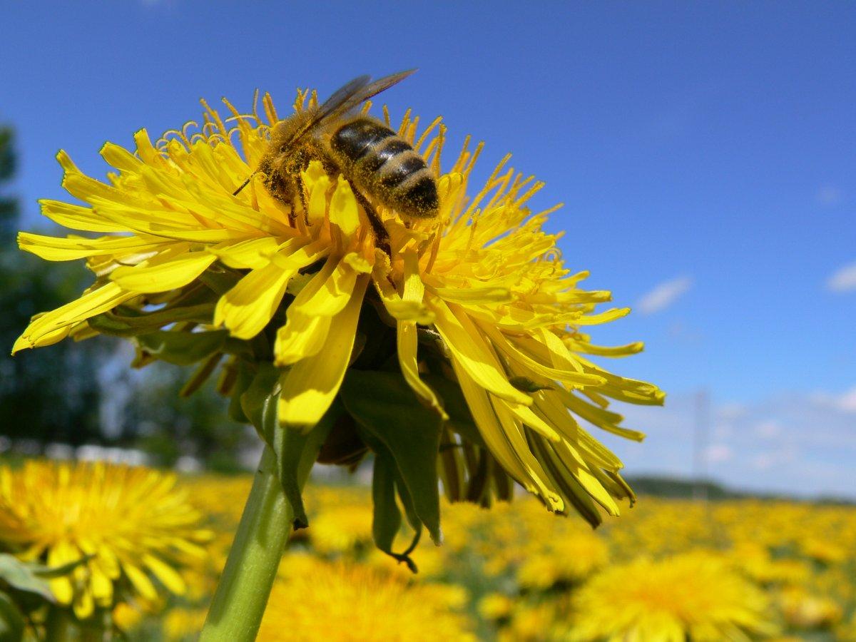 Blue Sky Bee Supply Bee Hive Smoker