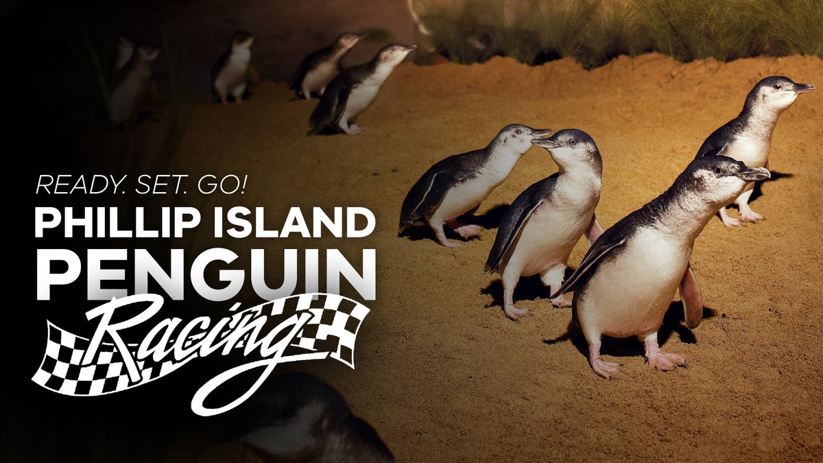 test Twitter Media - Ready. Set. GO! 🐧 If you're missing sport as much as we are, this commentary from Andrew Cotter on Phillip Island Nature Parks' penguin parade is sure to make your day.WATCH: https://t.co/zL1K3exL8g https://t.co/pm5f6pH24V