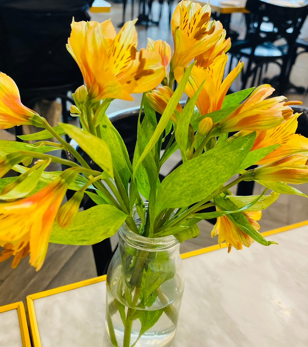 More flowerssssss!!!  #flowers #flores #colorfulpic.twitter.com/XewKmDOXMJ