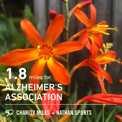 Crocosmia, and just a quick,hot afternoon walk. 1.8 @CharityMiles for @alzassociation.