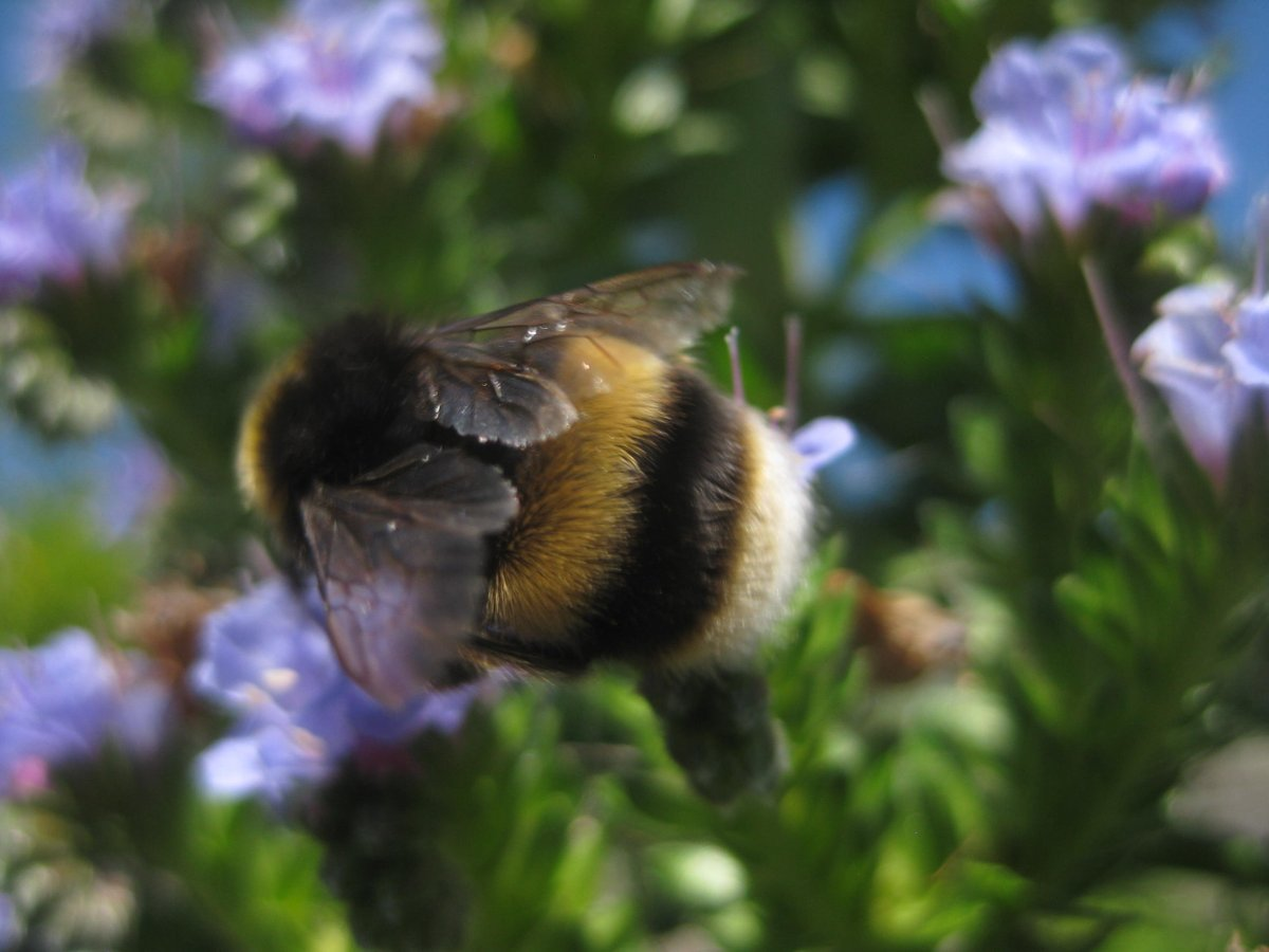 Took bee photos today. Bees only pose for about 3 seconds so you have to be quick.