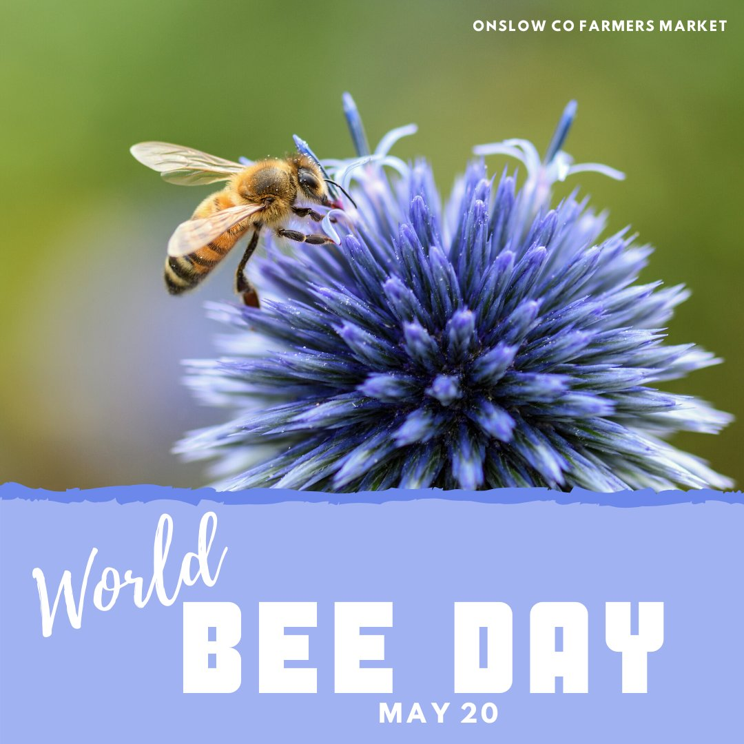 Today is World Bee Day!  Did you know that over 35% of the World's food production relies on pollinators?  #WorldBeeDay2020 #SavethePollinators  #OnslowCounty  #JacksonvilleNC <br>http://pic.twitter.com/RA8IKC6WqT