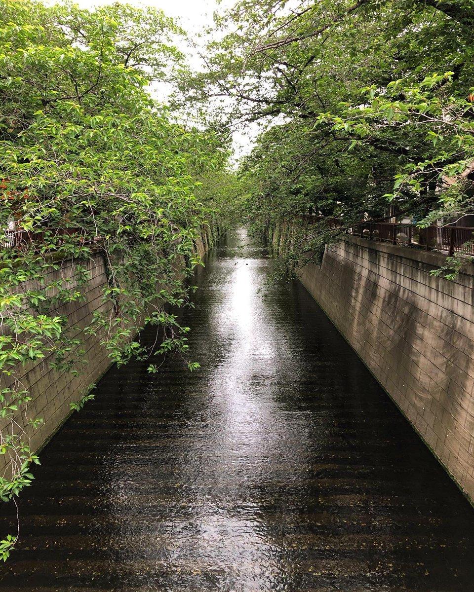 朝のウォーキング途中に通った橋 #目黒区 #目黒川 #宿山橋  #tokyo  #meguroriverpic.twitter.com/dTtCAq3ewj