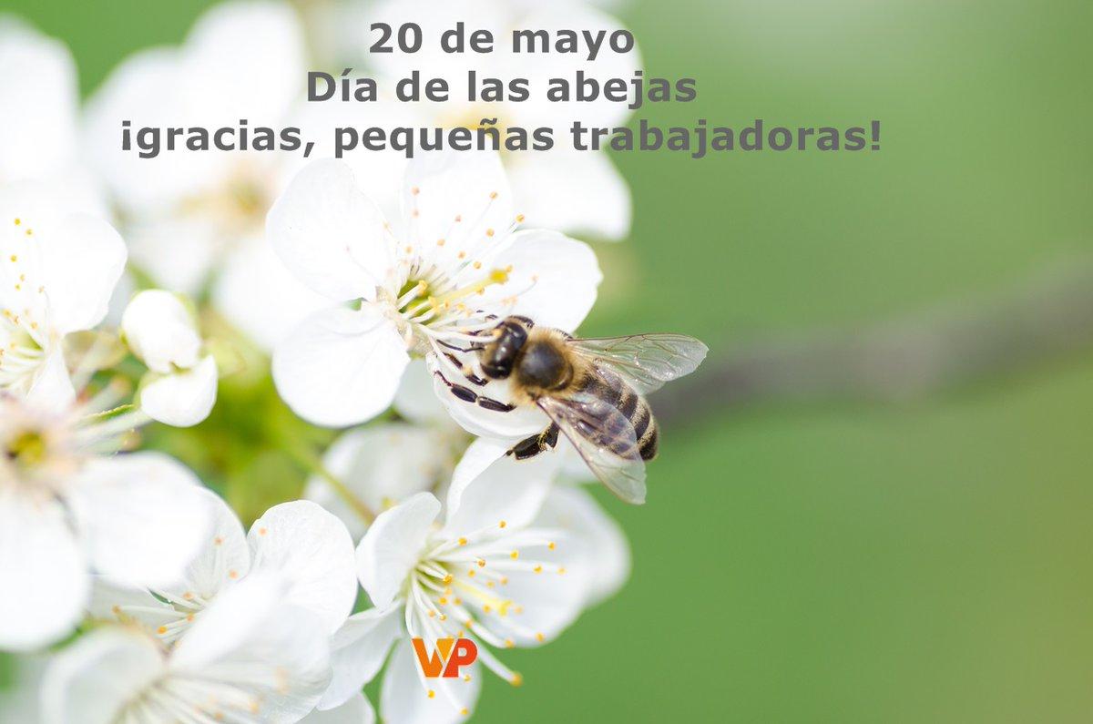 #DiaDeLasAbejas #vypviajarypasearpic.twitter.com/tbLplMcNsn