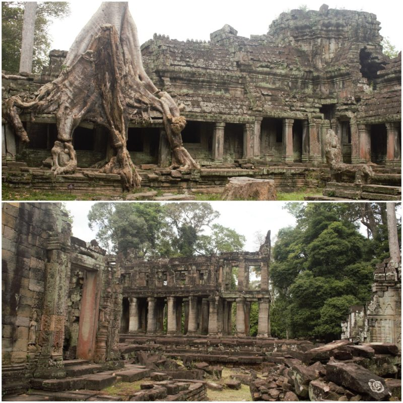 Did you know that the Preah Khan temple in Siem Reap was a self-contained city in itself? The temple complex housed more than 500 shrines and a Buddhist University apart from living quarters Click to read: https://bit.ly/3bJFaO6  #travel #SiemReap #Cambodia #PreahKhanpic.twitter.com/csCytL5c82