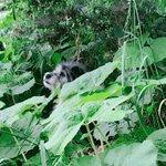 迷子犬です。飼い主さんが早く見つかりますように!
