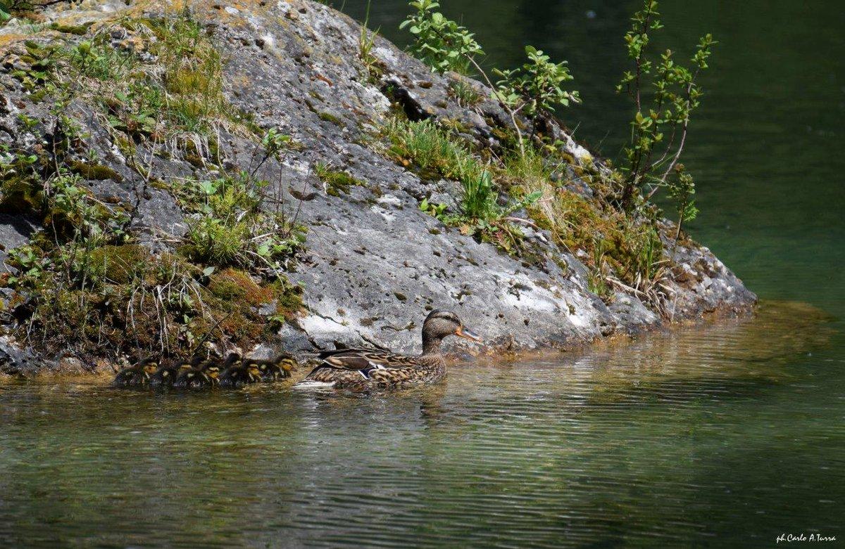 #maggio il laghetto Welsperg, in Val Canali #parco...