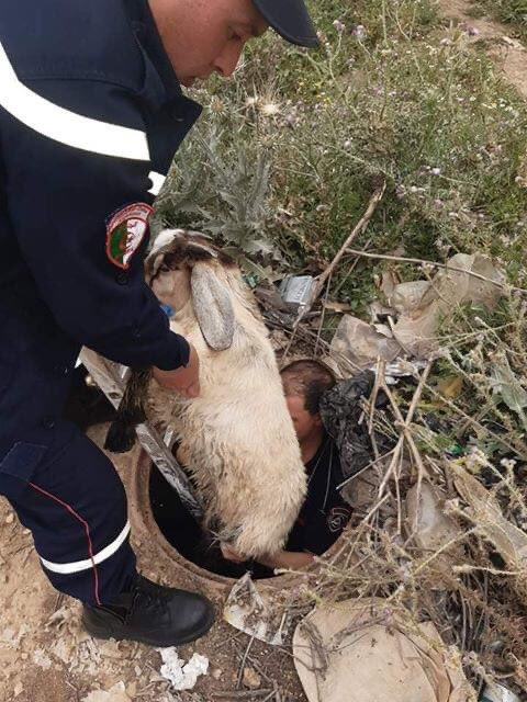 Algerian firefighters save goat after it fell into well in Souk Ahras, (easton Algeria). Firefighters said that the goat was moving freely after the rescue.  #Algeria #Algerie #الجزائر<br>http://pic.twitter.com/dvXYJzfmEn