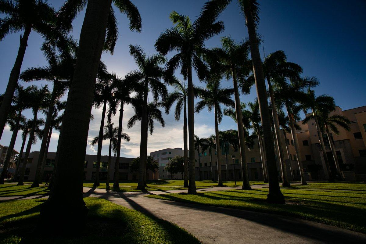 We take this palm tree thing VERY seriously #Paradise pic.twitter.com/XBU6v0YFza