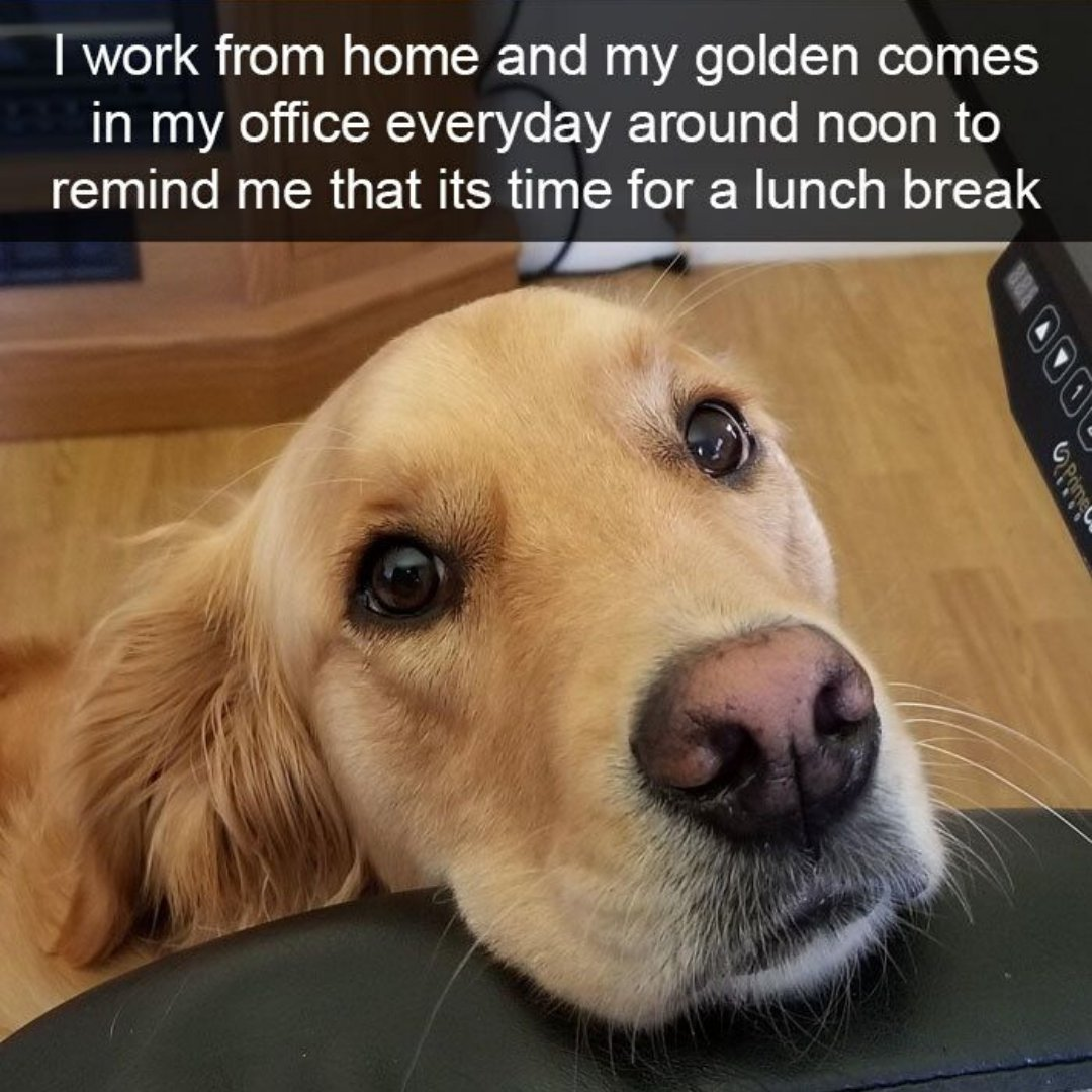 Happy almost Fri-Yay, frens! Let's share our personal work-from-home wins in the replies below! #Petsies #MyPetsies #PetMemes pic.twitter.com/pzPAorDGH2