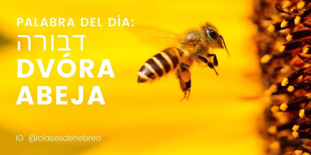 Ayer fue el dia de las abejas!!?? #DiaDeLasAbejas #abejas2020 #BeeDay #QuedateEnCasa #Jueves #JuevesDeGanarSeguidores #coronavirus #QuedateEnCasa #COVIDー19 #21May #21Mayo #Israel #PositiveVibespic.twitter.com/JlEtsDnHXJ