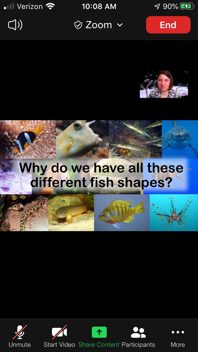 A huge Thank U to @CMDonatelli for an awesome @SkypeScientist session with my CMS team today and even my very inquisitive nephew! I learned so much about fish fossils, biomimicry, and even amphibious fish! #sciencerocks @cms_grizzlies @MrsMorwaycms @polson_cms<br>http://pic.twitter.com/BhVoY4HfHl