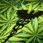 Image for the Tweet beginning: #cannabis #weed #marijuana IM Cannabis'