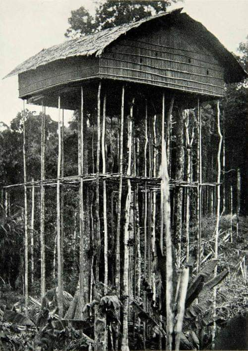 Stilt Pole House, Pygmy Village, in Papua New Guinea Architecture, photography by Dr. E.W. Brandes, 1929, in  National Geographic Magazine 9 #architecture #arquitectura pic.twitter.com/wVDwIZlYXi
