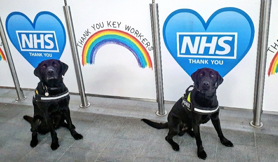 Big THANK YOU to our pawsome colleagues @NHSuk 🐶🐾 👏👏👏👏👏👏👏👏👏👏👏👏 #ClapForOurCarers #ClapfortheNHS #clapforkeyworkers