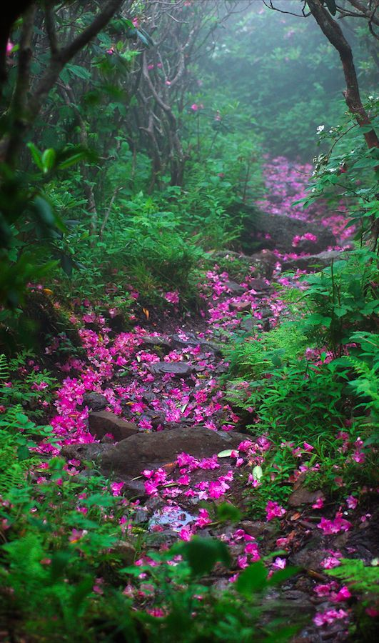 May you find a wonderful path to follow.   #naturelovers pic.twitter.com/zI4gVQRLDR