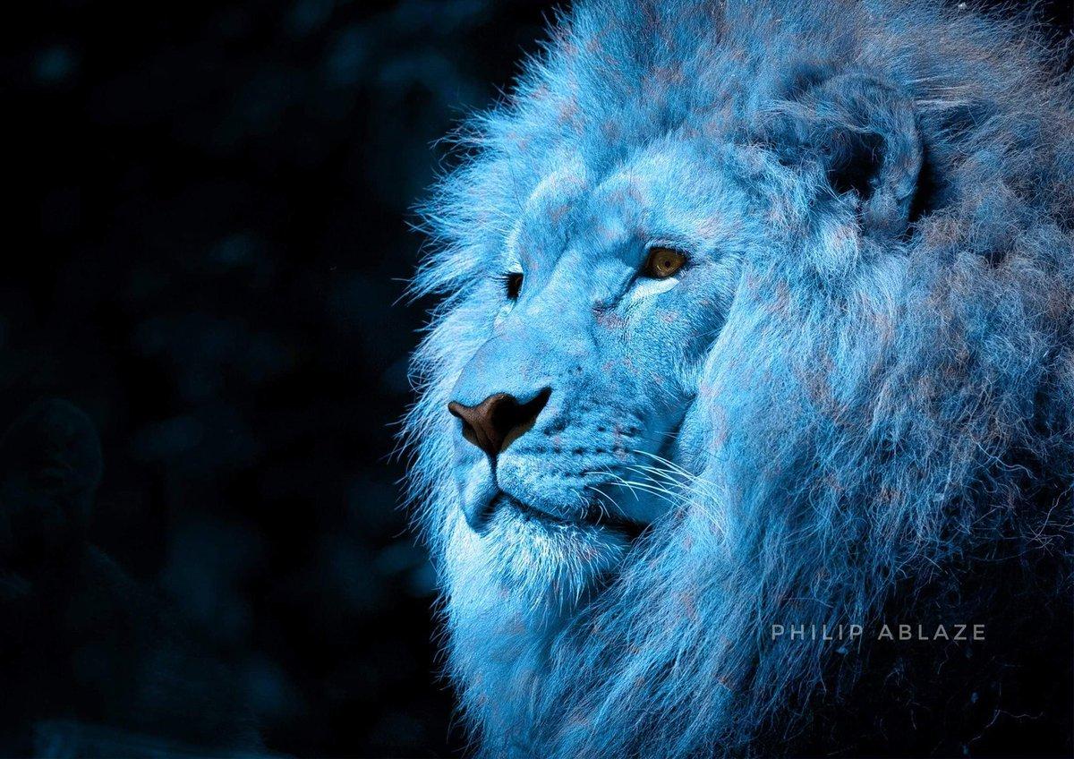 Sky Mane . . . #lions #lion #wildlife #africa #lionking #animals #nature #lioness #wildlifephotography #bigcats #safari #nfl #football #lionsofinstagram #love #cats #naturephotography #detroitlions #photography #leo #l #wild #animal #southafrica #lionpride #king #galsen #kpic.twitter.com/npCTQw9D9T