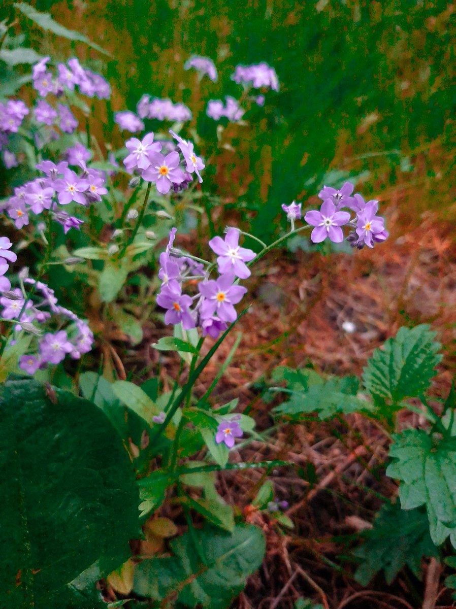 Hello how you doing ?  #Romania #flowers #nature #naturephotography #beautyinnature #collors #NewPost pic.twitter.com/v2XJ5yu22K
