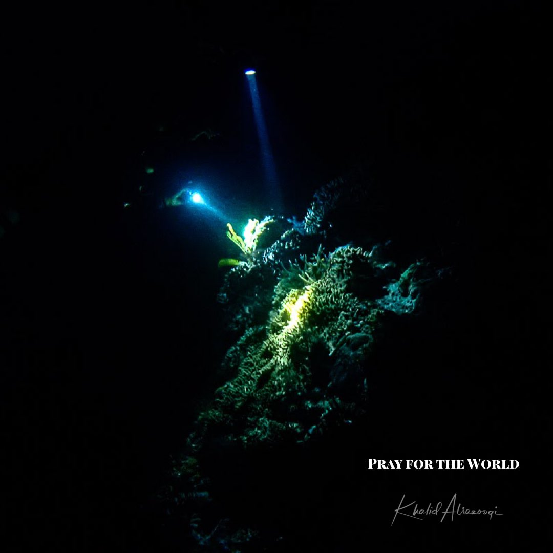 Let's pray together for the humanity  #covid19 #diving #sea #underwaterphotography #scuba #ocean #scubadiving #dive #fish #nature #padi #water #travelpic.twitter.com/nzIcQDlknF