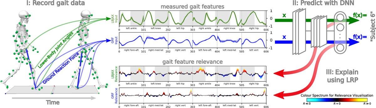 DNNのブラックボックス性から,臨床的な歩行解析におけるDLの使用は普及していなかったが,著者らはmocapと床反力データを用いたLayerwise Relevance Propagationを使うことで,効果的にモデル出力を解釈することができることを示した.データセットはオープン.