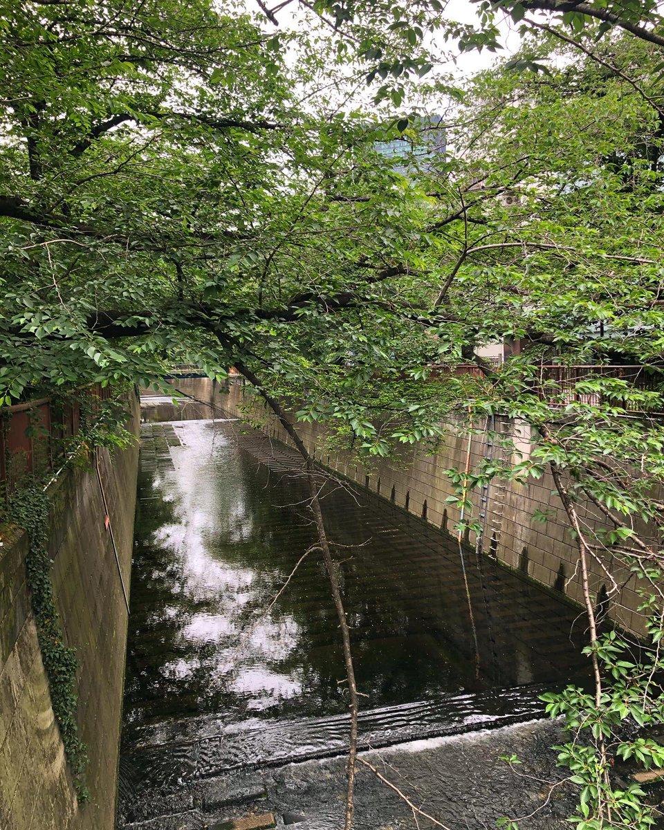 朝のウォーキング途中に通った橋 #目黒区 #目黒川 #柳橋 #tokyo  #meguroriverpic.twitter.com/BDBOiF0skI