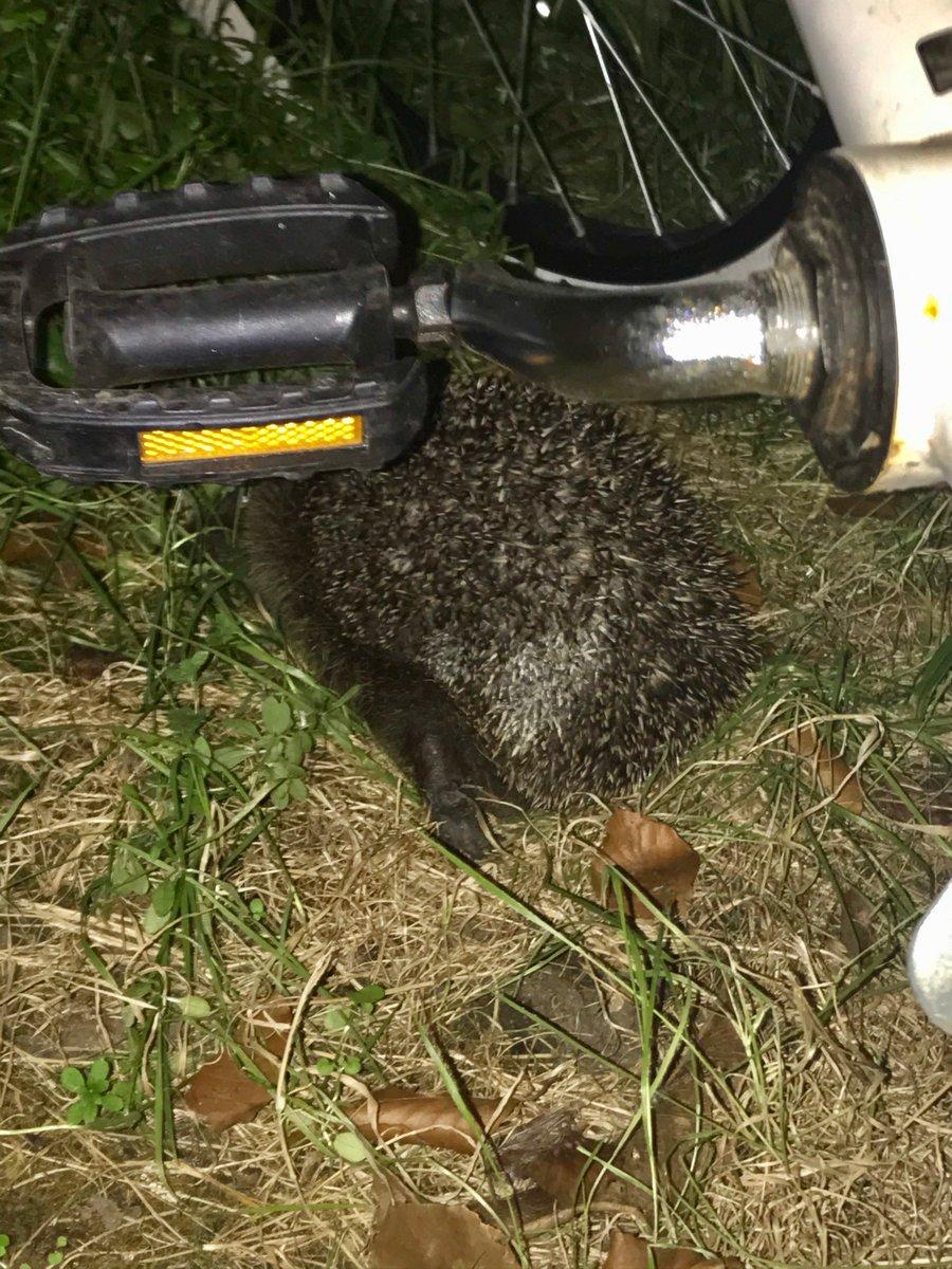 Here is the hiding hedgehog. @alicenfranklin look, it's Hugh 💙