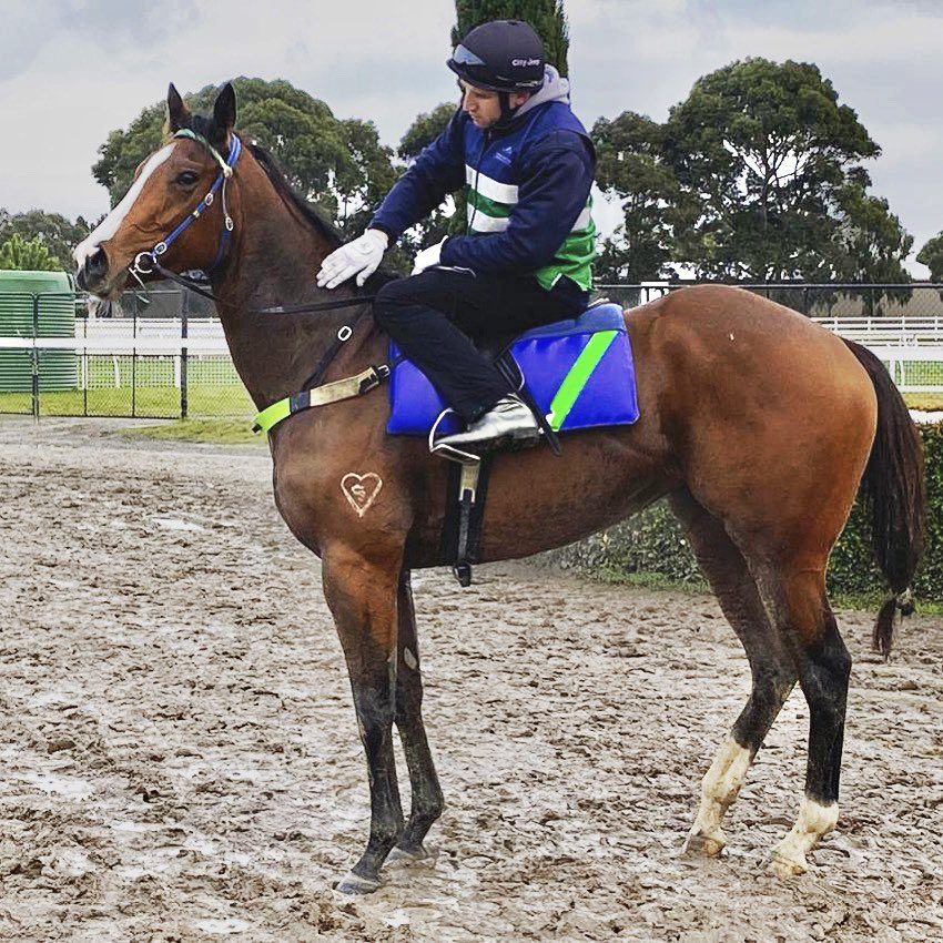 Cannot wait to see our undefeated filly Ms Catherine return to @TheValley in the coming weeks #speed pic.twitter.com/7hPyhiyYPm