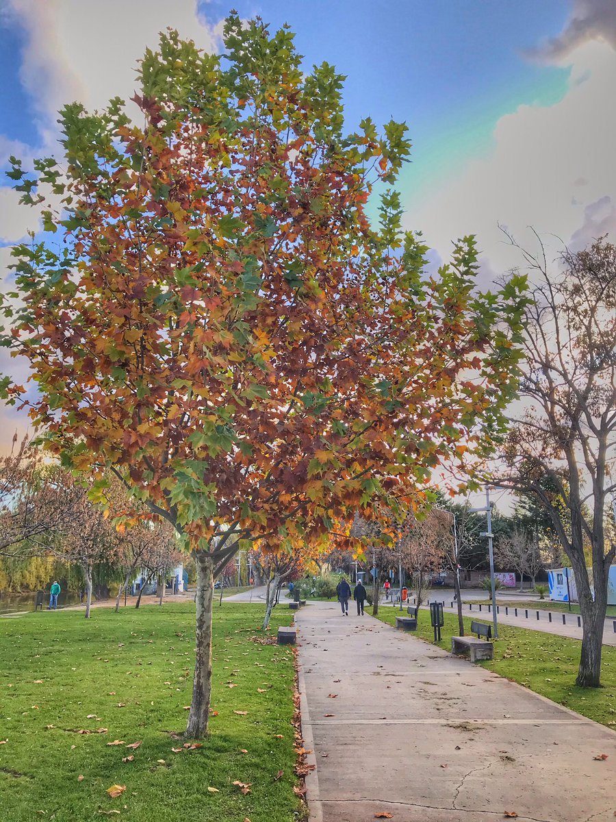Caminatas recreativas, #otoño en Neuquén capital! #CuidemosnosEntreTodospic.twitter.com/bcS6KzvxCd