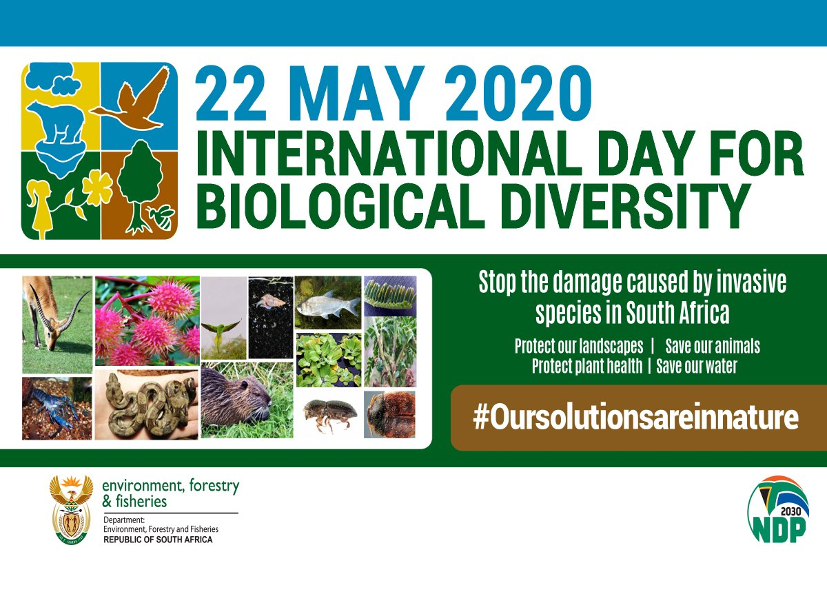 Our solutions are in nature. Today we commemorate International Day for Biological Diversity. Despite all our technological advances we are entirely dependent on healthy and vibrant ecosystems for our water, food, medicines, clothes, fuel, shelter and energy #BiodiversityDay2020 pic.twitter.com/O7RUsk5Hiv