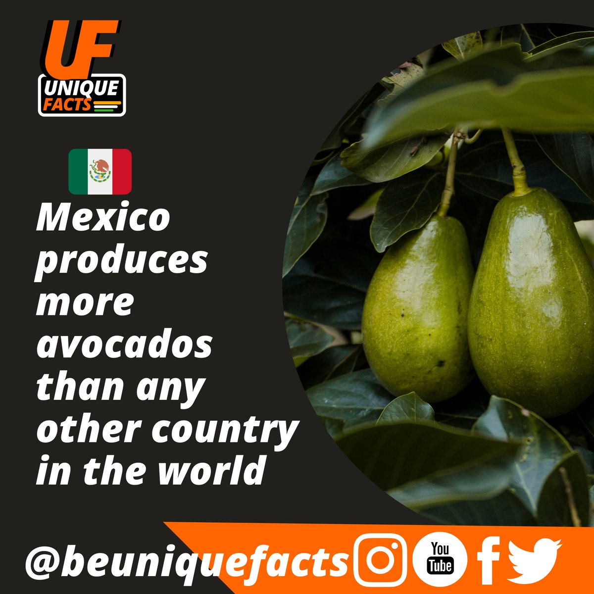 . Follow us to get daily amazing & unique facts @beuniquefacts . #avocado #avocadotoast #mexico #méxico #world #mexicanfood #worldfacts #Palestine #beuniquefacts #uniquefacts #coronavirus #fridaymorning #MaharashtraBachao #Israel #ಕನ್ನಡದಲ್ಲಿ_ಮಾಹಿತಿಕೊಡಿ  #followmepic.twitter.com/AcNudNtFzY
