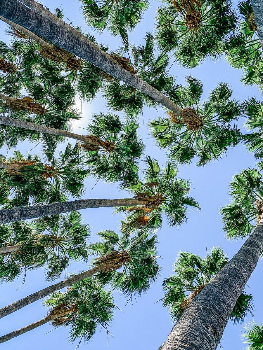 This makes me happy #blueskies #palmtrees #arizonapic.twitter.com/dFwFcg59eK