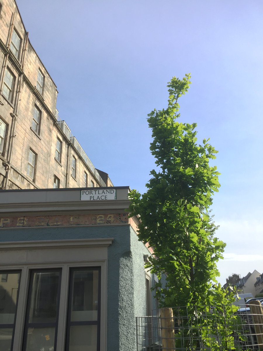 Out watering the new tree in Portland Road. Help us look after Edinburgh's street trees by supporting Tree Time at https://t.co/wE9bLnCPHl @Edinburgh_CC @WoodlandTrust