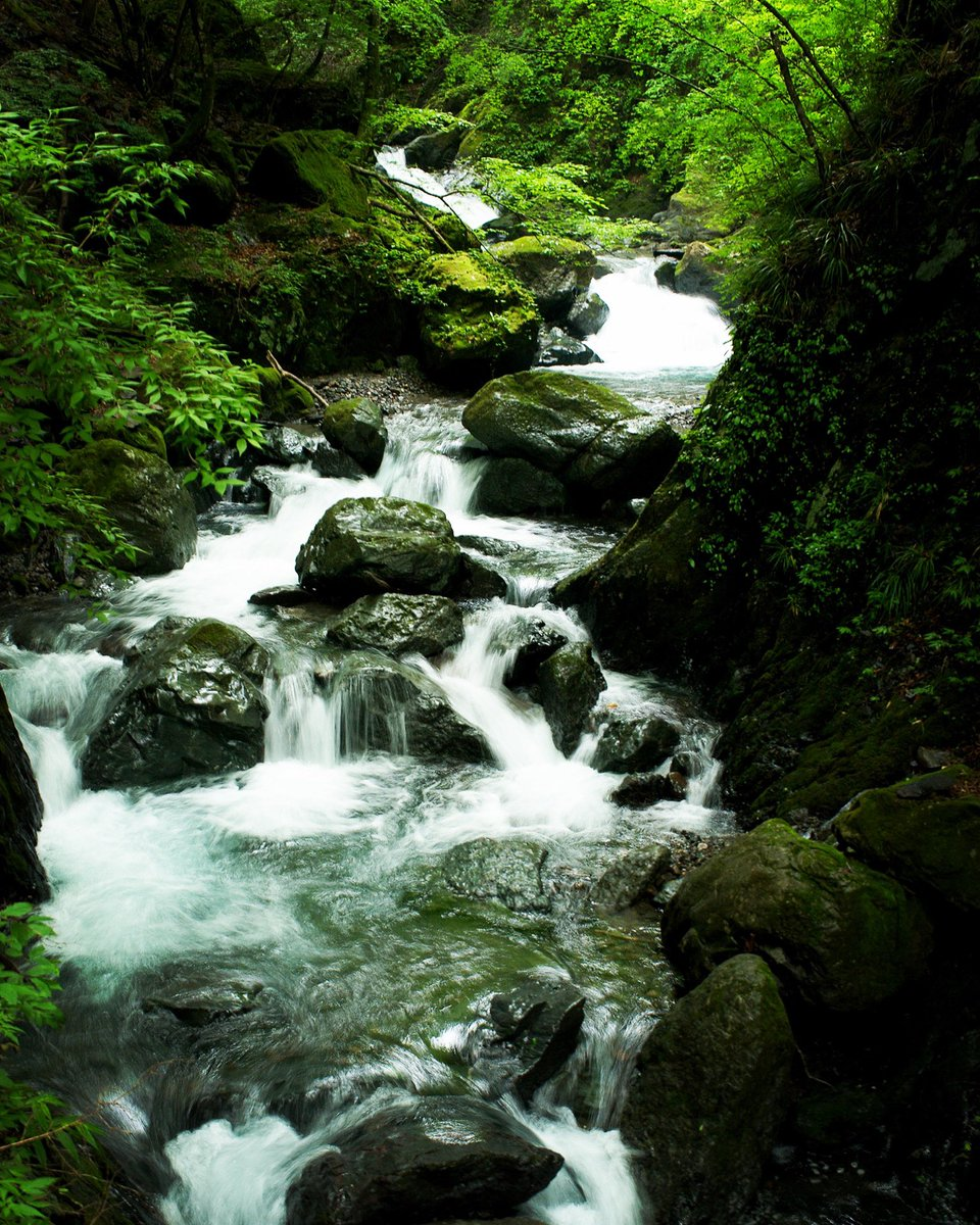 Mountain stream #snapshot #moutainstream #intheforest #写真好きな人と繋がりたい #キリトリセカイ #ファインダー越しの私の世界 #東京カメラ部 #東京写真部 #pashadelic #渓流pic.twitter.com/NDPqdb9PnY