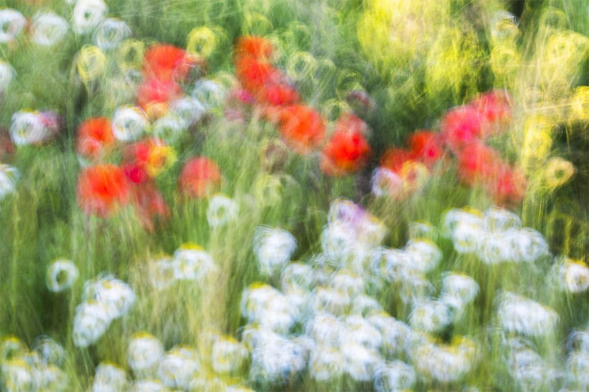 """Impressionist Spring"" © 2020 David Frutos Egea #canonespaña #EquipoCanon #Impressionism #nature #pictorialismo #fotografia #photography #naturephotography #naturaleza #flores #flower #amapolas #poppies #Primavera #Spring #field #daisies #colorful #fineart @CanonEspanapic.twitter.com/uVhlnaAiFx"