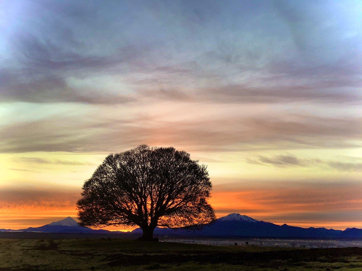Buenos días otro bello amanecer en el sur de Chile con el mismo arbolito de fondo #alerce #amanecer #otoño pic.twitter.com/vJptaojzTd