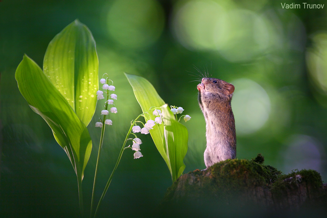 Good afternoon dear friends. Wishing you all a happy Friday and a wonderful weekend.         .. delight before beauty. Vadim Trunov. #spring #hope #mood #naturepic.twitter.com/81XihxzbLP