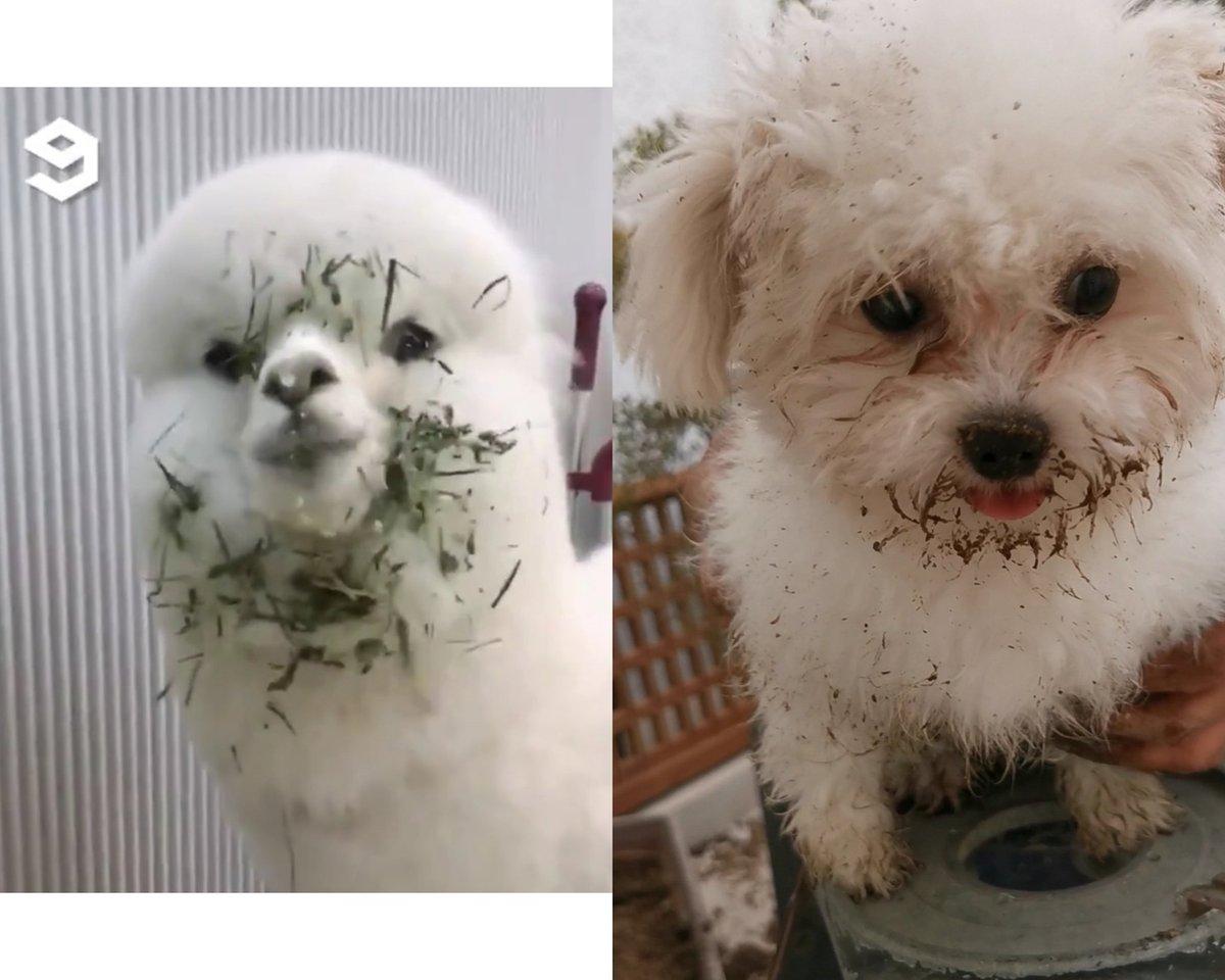 @9GAG My puppy's spirit animal 😂😂😂 https://t.co/kXg5UcvEyh