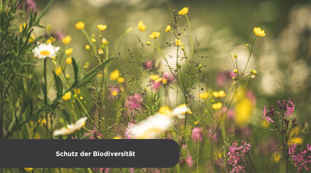 #BiodiversityDay