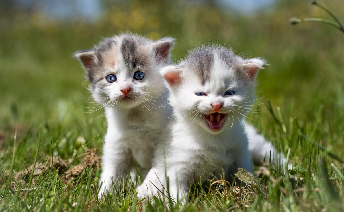 """i will protect my sis with my life"" #cats #catsoftwitterpic.twitter.com/hWiA4mULZU"