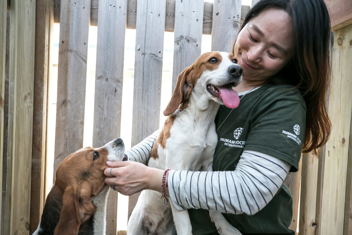 (3/3) The dogs will continue receiving care until its safe to transport them to the U.S. and Canada where the search for their new, loving homes will begin! Once again, THANK YOU for helping to make this rescue possible ❤