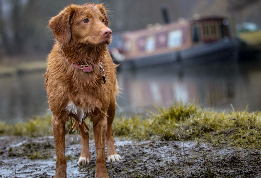 Can Dogs Walk In The Rain? https://gigglepets.net/can-dogs-walk-in-the-rain/ …  #gigglepets #dogloverpic.twitter.com/7WiT1tN8g6